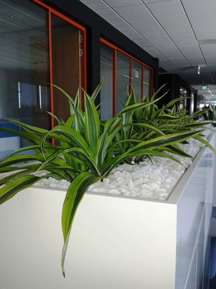 Beautiful  Office Plant Rental We Design And Install Plants For Any Setting Our