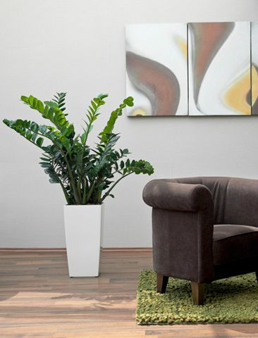 Make These First Impressions Become Outstanding Lasting With Stunning Plants And Pots For More Information Regarding Our Reception